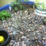 Left Growbed, after replanting