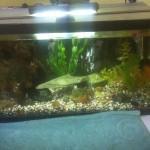 Our Hobby Aquarium