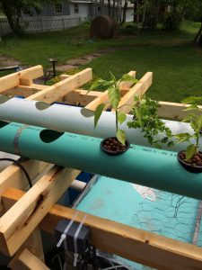Grow-Pipe with plants