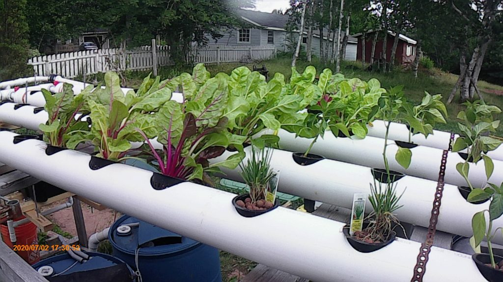 100mm grow-pipes with chives, chard, beans and more.
